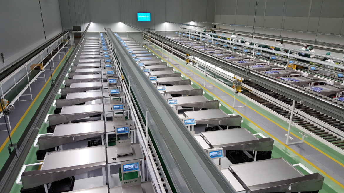 Southern farms empty production lines