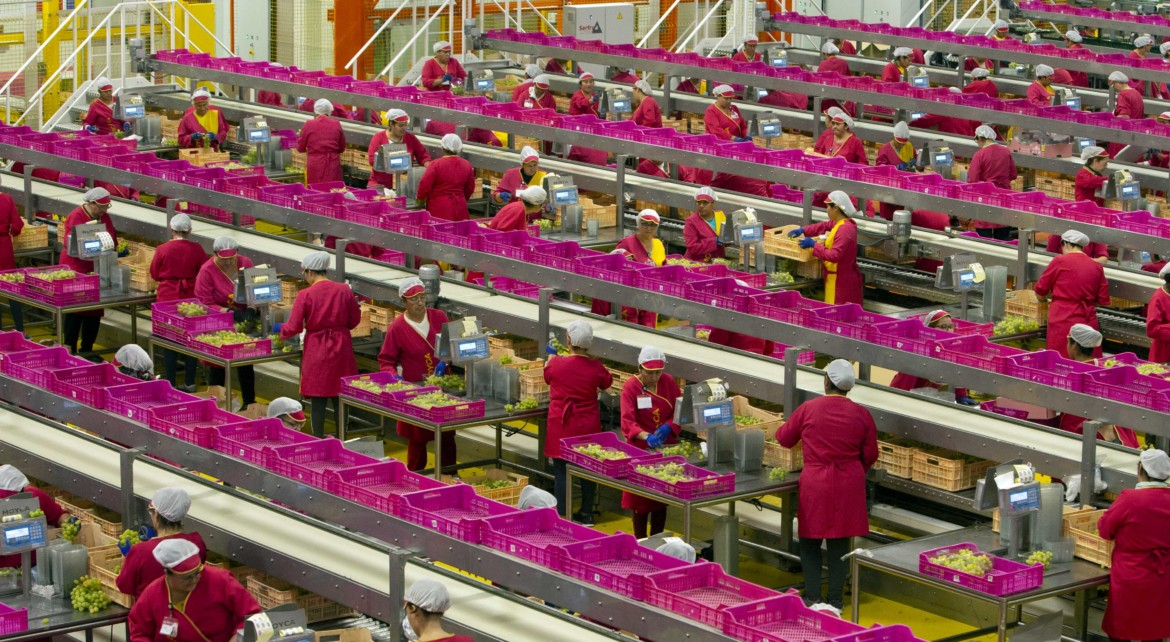 grape packing lines