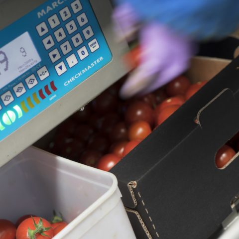 Tomato checkmaster weighing scale