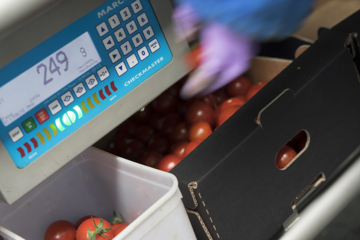 Yield Control Module YCM tomato weighing scale