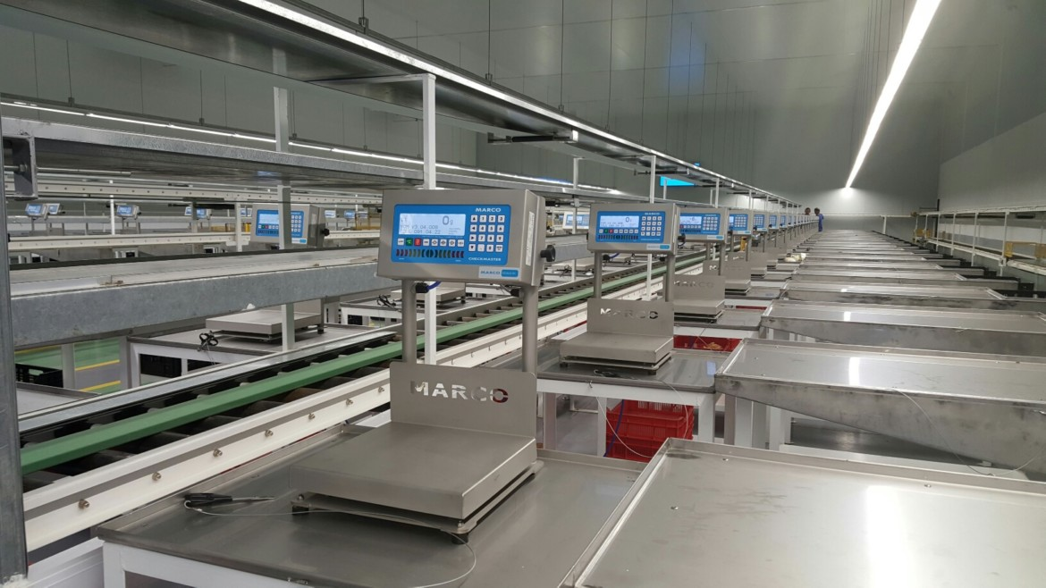 side view packing production line weighing scales conveyor belts