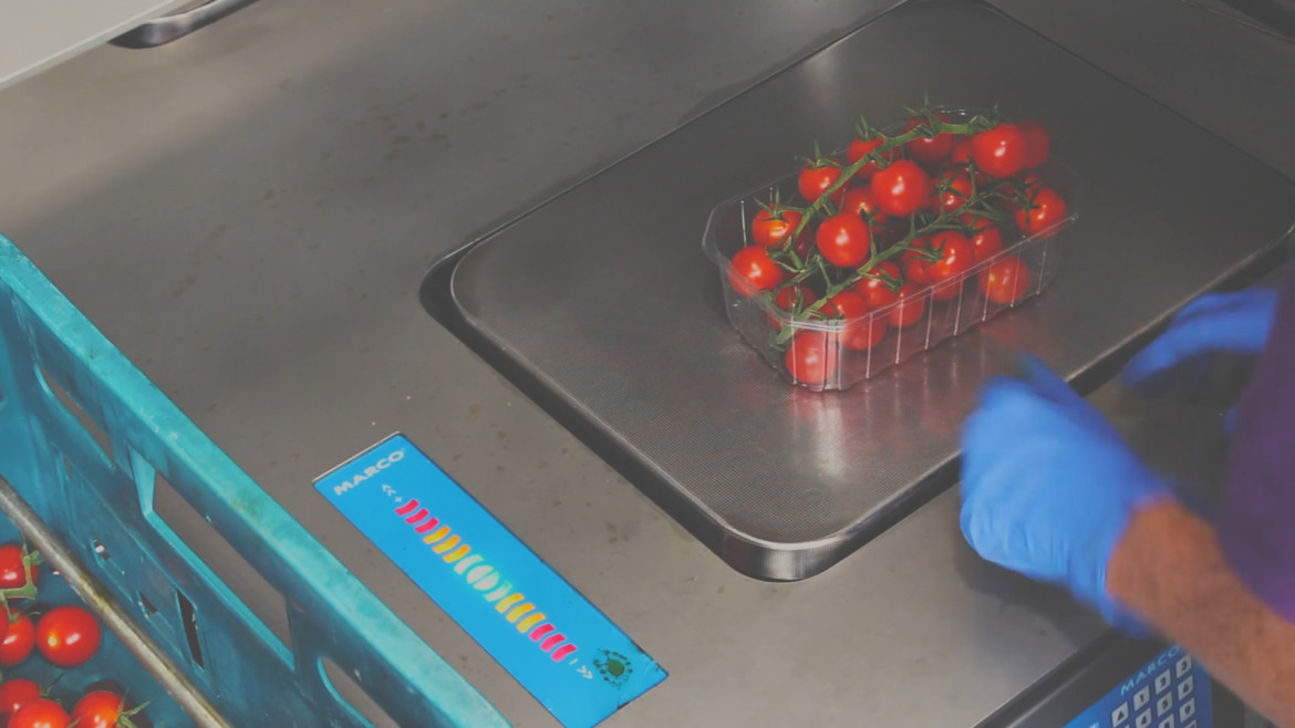 tomato weighing scale perfect weight check light