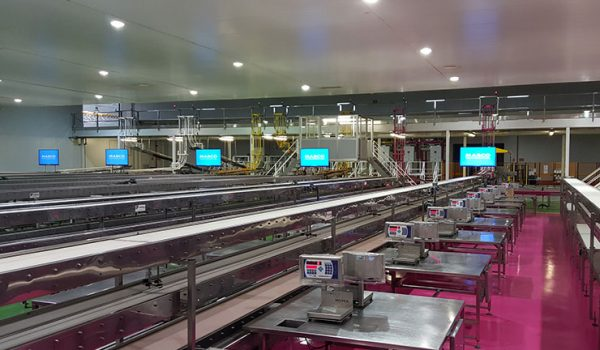factory wide display screens in pack house