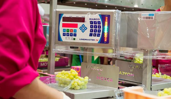 packing control grapes Moyca
