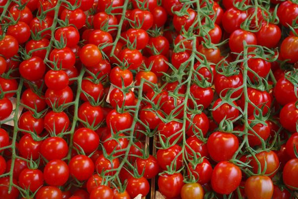 Vine Tomatoes at Rougeline marco customer case study
