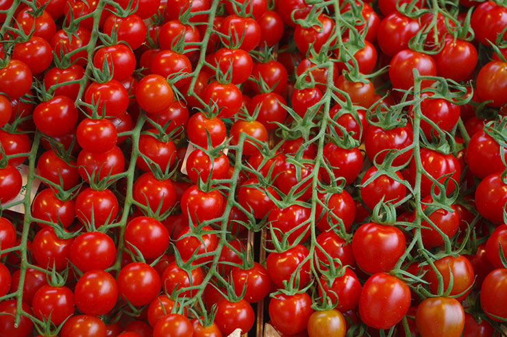 Vine Tomatoes at Rougeline